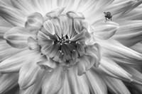 Monochrome Flower 78 Fine Art Print