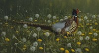 Dandy Rooster - Formosan Ring-necked Pheasant Fine Art Print