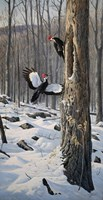 Swooping In - Pileated Woodpeckers Fine Art Print