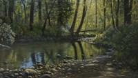 Woodland Creek Fine Art Print