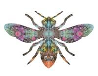 Transverse Bee Fine Art Print
