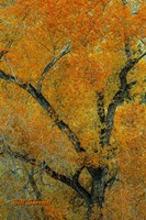 Autumn Contrast Fine Art Print