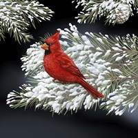 Night Cardinal Fine Art Print