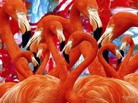 Red Flamingo Family Fine Art Print