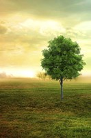 Lone Green Tree Fine Art Print