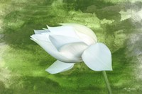 White Lotus Fine Art Print