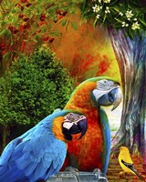 Parrot Love 3 Fine Art Print