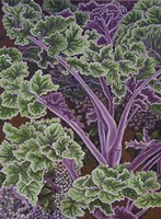 Cabbage Stalks Fine Art Print