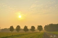 Country Morning Glow Fine Art Print