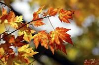 Fall Colors Fine Art Print