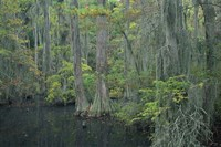 Cypress Cove Fine Art Print