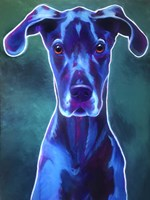 Great Dane - Blue Fine Art Print