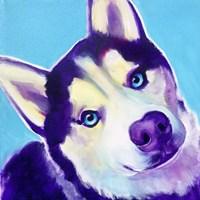 Husky - Dico Fine Art Print