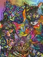 Bed Cats Fine Art Print