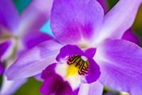 Exotic Orchid 11 Fine Art Print