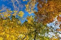 Autumn Colors Fine Art Print