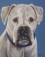 Boxer White Fine Art Print