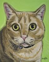 Cat Tabby Wrigley Fine Art Print