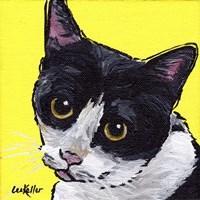 Cat Tuxedo Fine Art Print