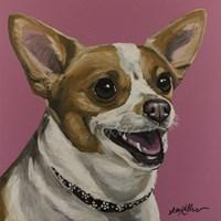 Chihuahua Bella Fine Art Print