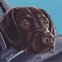 Chocolate Lab In Car Fine Art Print