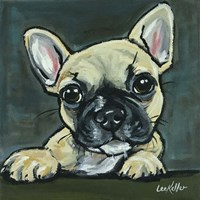 Frenchie Pup 1 Fine Art Print