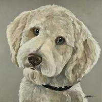 Goldendoodle On Gray Fine Art Print