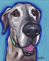 Great Dane Beau Fine Art Print