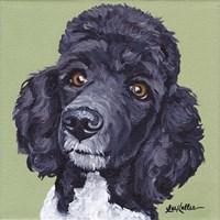 Standard Poodle Tommy Fine Art Print