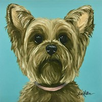 Yorkie On Robins Egg Fine Art Print