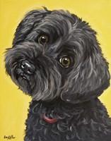 Yorkie Poo Millie Fine Art Print