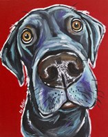 Black Lab Arlo Fine Art Print