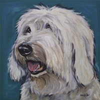 Old English Sheep Dog Rooney Teal Fine Art Print