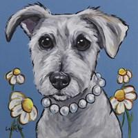 Schnauzer Daisy Fine Art Print