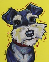 Schnauzer Mr Foo Fine Art Print