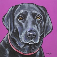 Black Lab On Pink Fine Art Print