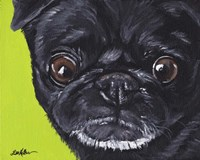 Black Pug On Green Fine Art Print