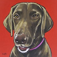 Chocolate Lab On Orange Fine Art Print