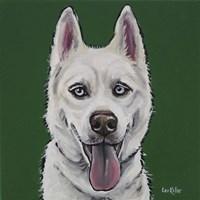 Husky Echo Fine Art Print