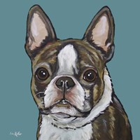 Sasha Boston Terrier On Teal Fine Art Print