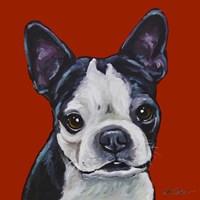 Sophie Boston Terrier On Red Fine Art Print