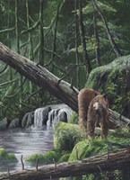 Deep Woods Fisherman Fine Art Print