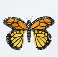 Butterfly Collection Monarch Fine Art Print