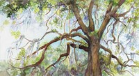 Southern Live Oak Tree Fine Art Print