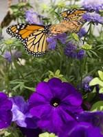 Butterfly 1 Fine Art Print