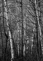 Black & White Natural Fine Art Print