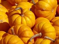 Pumpkins Fine Art Print
