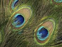 Natural Detail 29 Fine Art Print