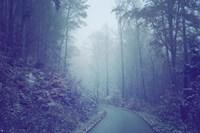 Blue Woods Misty Way Fine Art Print