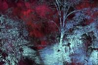 Moonlight Forest Fine Art Print